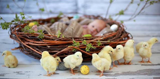 gimdymas, pasiruošimas gimdymui, paskaitos internetu